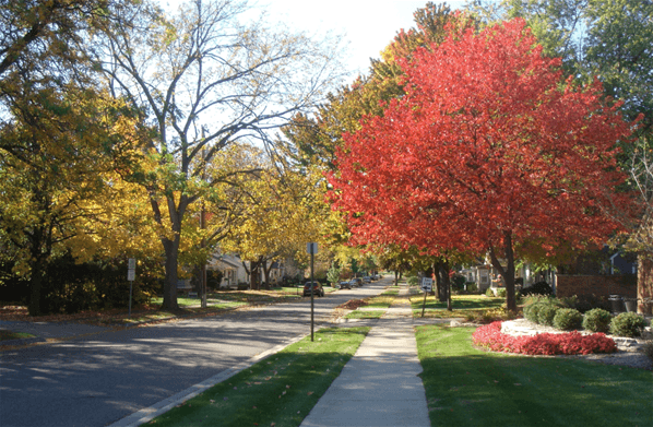 Fall - Linwood red tree